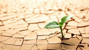 planta nascendo de terra seca