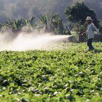 Estudo aponta que 80% das empresas de agronegócio buscam a transformação digital