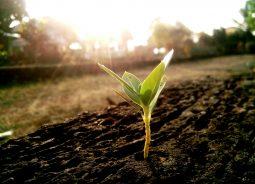 Accenture e SAP levam sustentabilidade às empresas