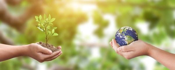 Amazon investe em projeto de agricultura sustentável e reflorestamento no Pará