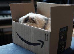 Cibercriminosos miram o Amazon Prime Day: quase metade dos novos domínios são maliciosos