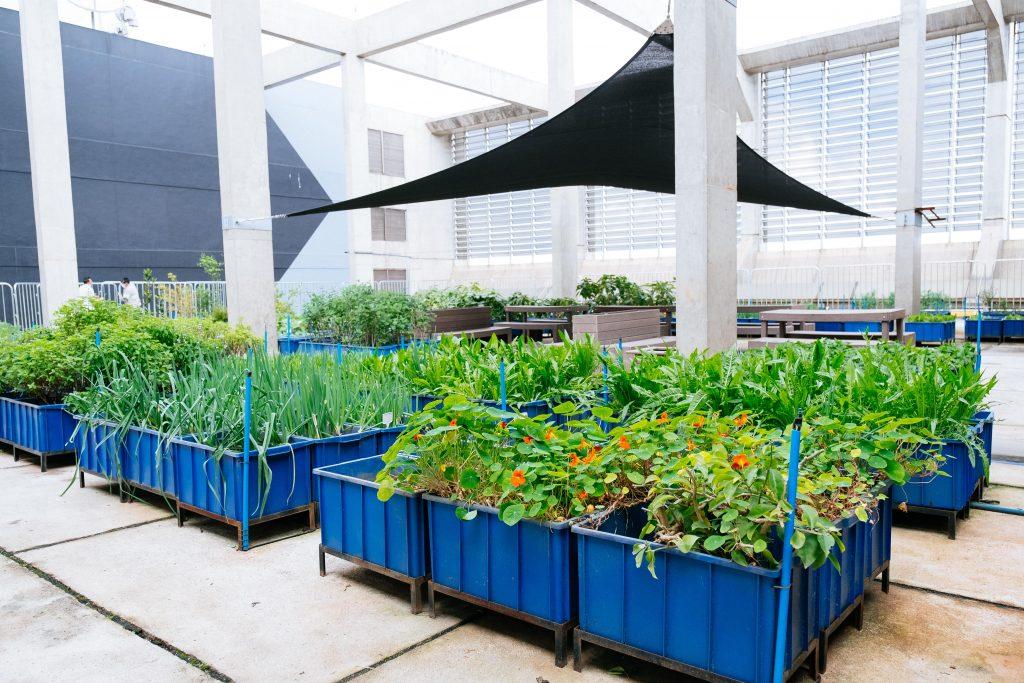 Horta urbana é criada na cidade de São Paulo, para reforçar ações de sustentabilidade da IBM